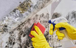 curatare mucegai spatii afectate