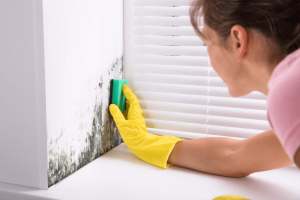 curatare mucegai pereti si geamuri